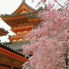 JAPONIA – ortodoxie si traditie nipona – 2009